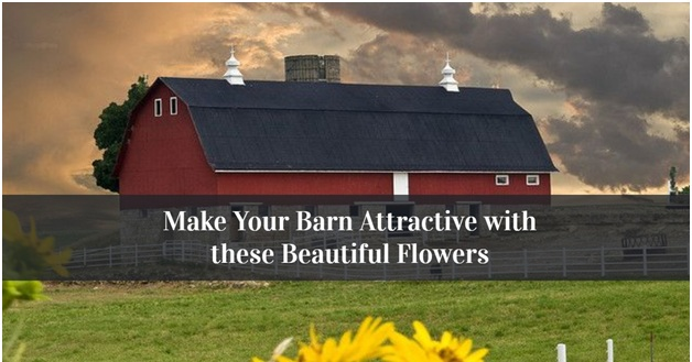 Make Your Barn Attractive with these Beautiful Flowers